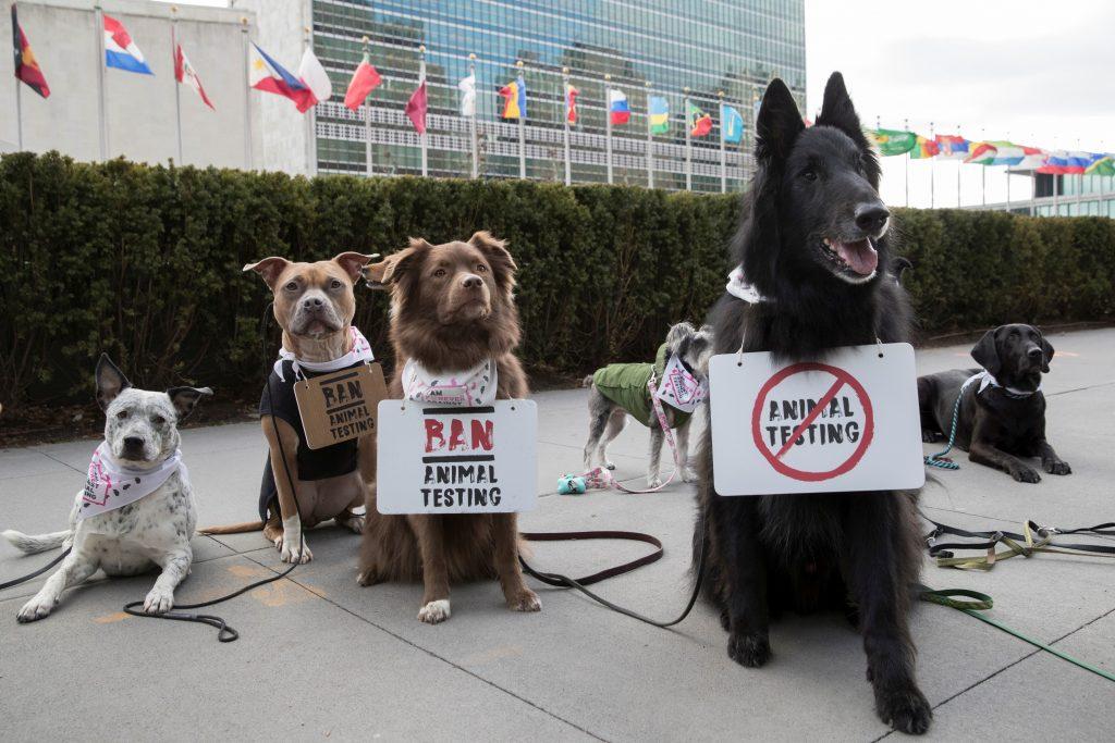 The Body shop, tüntetés az állatkísérletek ellen, rúzs és más