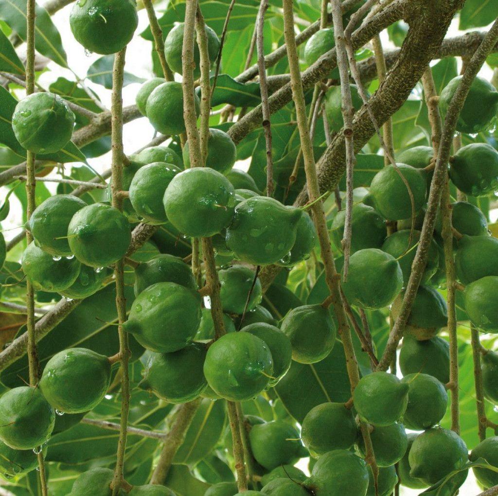 Etnobotanikai kutatások, ősi tudás, növényi hatóanyagok, Epoch, rúzs és más