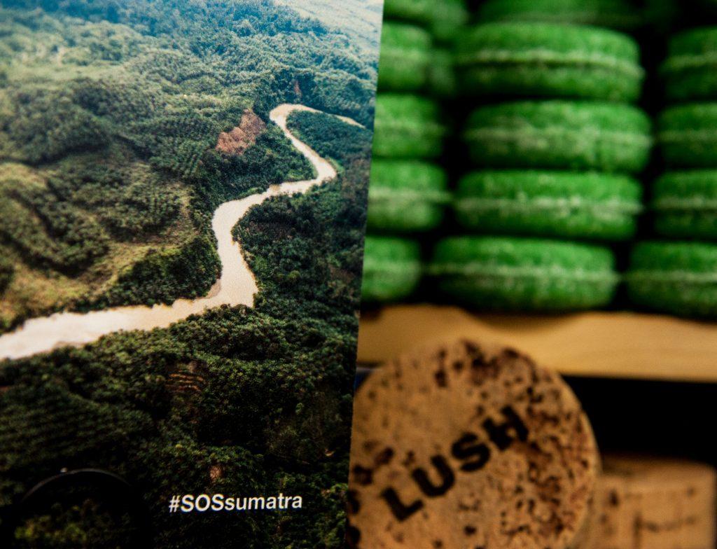szumatrai orangutran, orangután, rúzs és más, laush, csr, támogatás