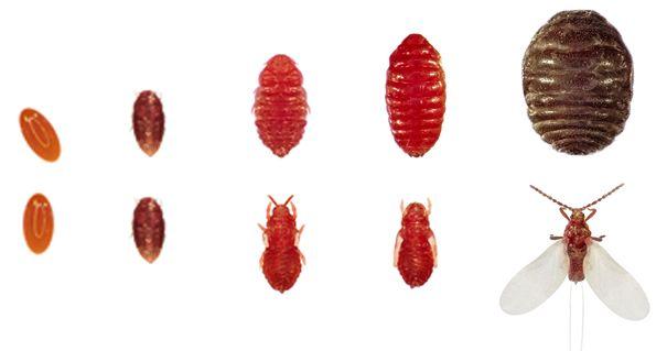 állati összetevők, állati származék, szépítőszer, kozmetikum, bíbortetű, ámbra, mósusz, placenta, rúzs és más, extrém, állati