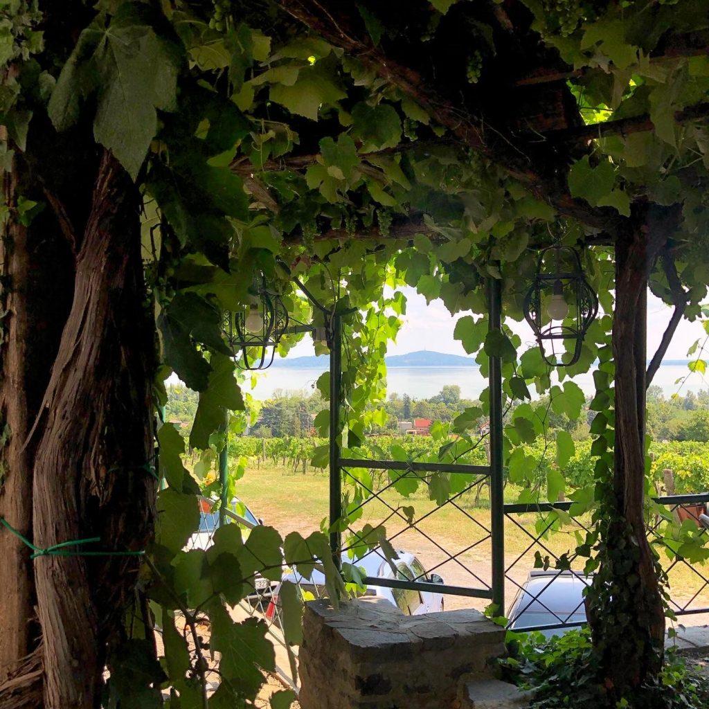 szőlőhegy bisztró, laposa, badacsonytomaj, gasztronómia, étterem, balaton, rúzs és más, bor, borászat