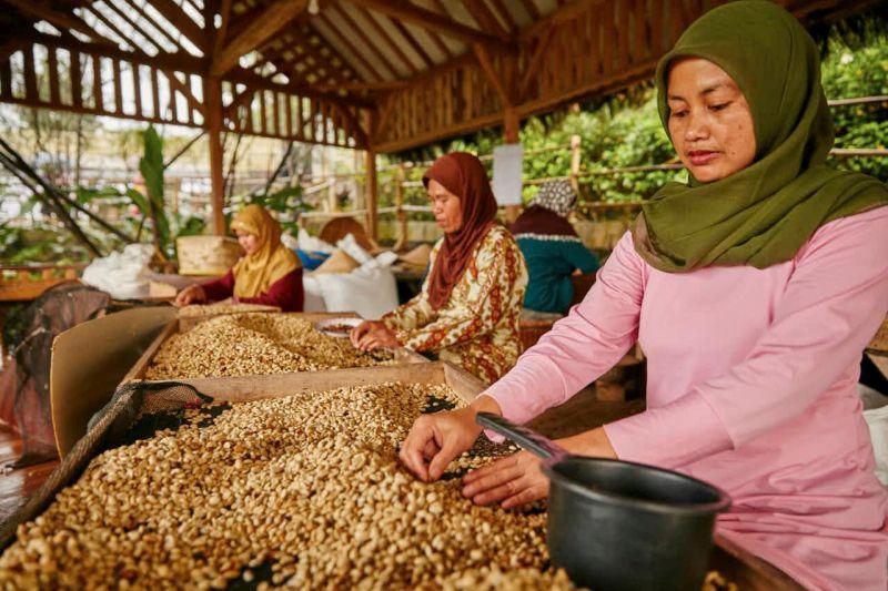 Nespresso, Indonézia, kávé