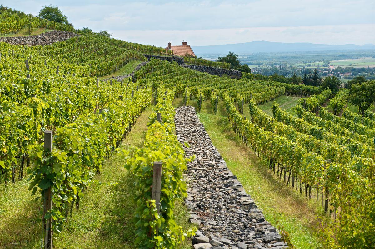 Kreinbacher szőlőbirtok, Somló