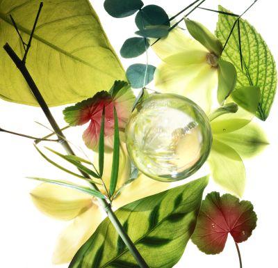dove, powered by plants, rúzs és más, növényi, ecocert, cosmos, bio, természetes, környezetbarát, újrahasznosított műanyag
