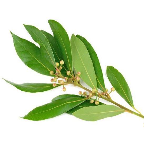 herbatherapy, illoolaj, aromaterapia, utipatika, ruzs es mas, gyogyito, egeszseg